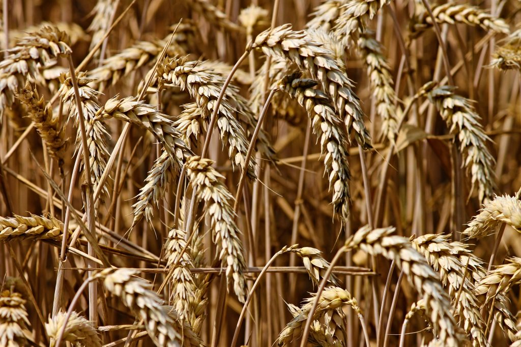 grains and hay